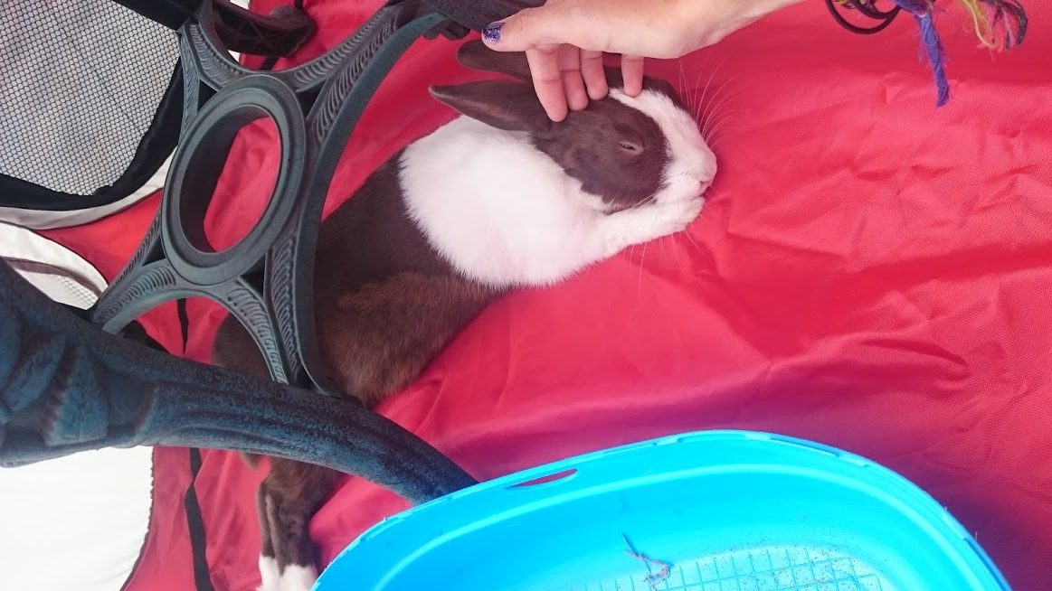 Travelling Bunny