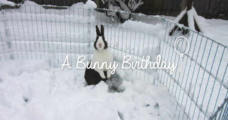 A bunny birthday